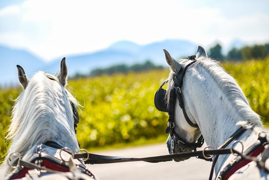 Visit Equestrian centre Celje