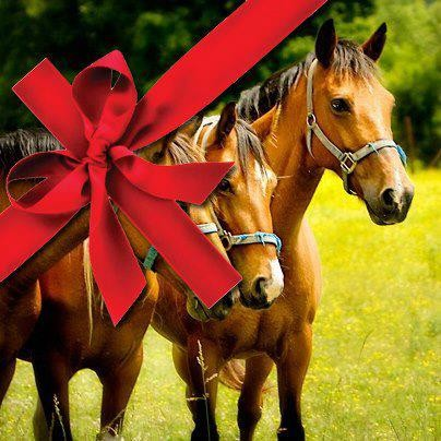gift certificate template horse gallery certificate